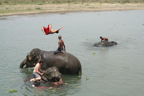 Купание со сланами в реке Рапти